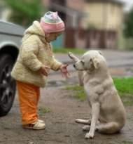 犬を飼うと、病気に強くなり、感染症リスクが減少する!!<