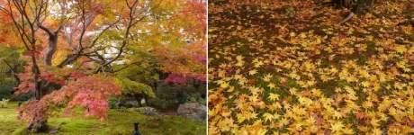 京都 紅葉観光